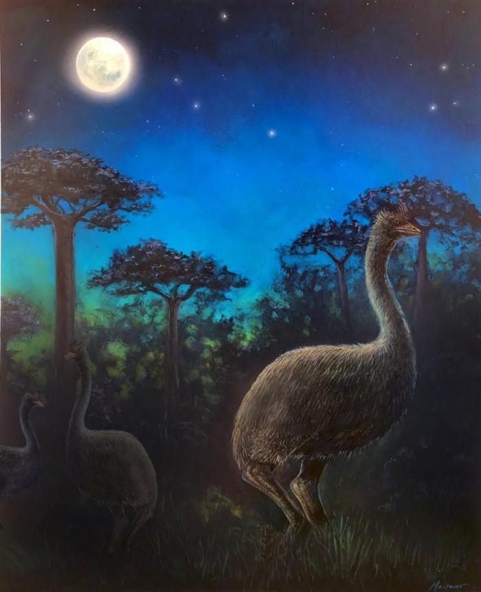 """有史以来最大鸟类是""""夜猫子""""且几乎没有视力"""