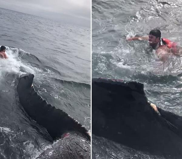 海域巨鲸被困警卫队无能为力 渔民勇敢跳海营救