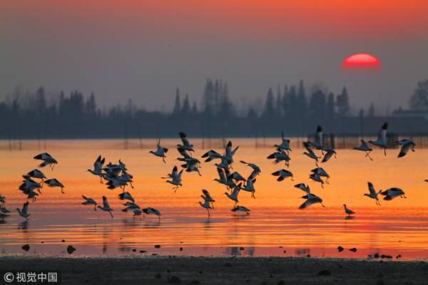 湖南省岳陽市,越冬候鳥在東洞庭湖國家級自然保護區振翅齊飛
