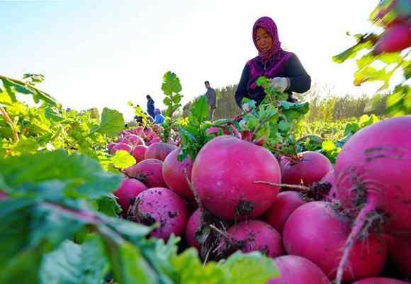 蔬果种植盘活城郊农村经济