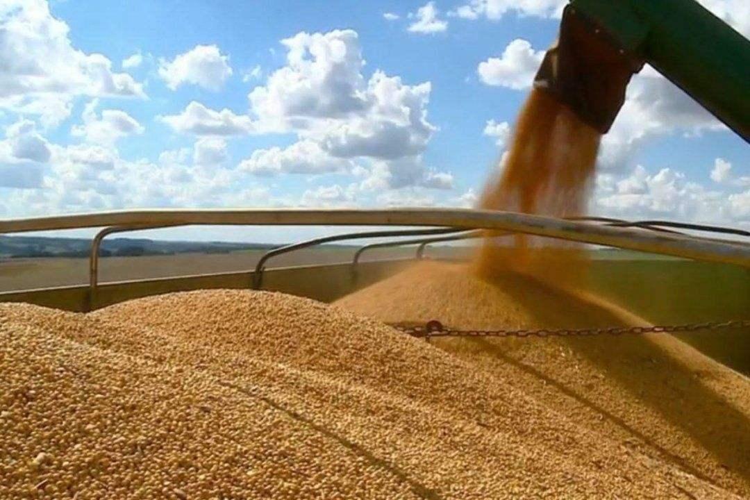 贸易战下,美国农民被迫放弃种大豆