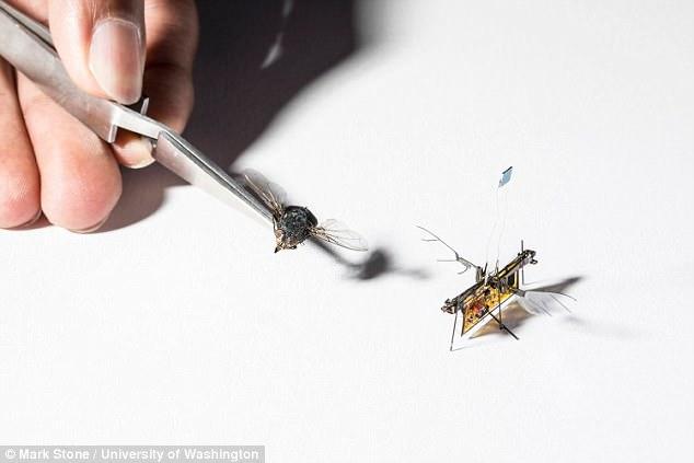 美研发机器苍蝇 可用于灾区搜救和检测气体泄露
