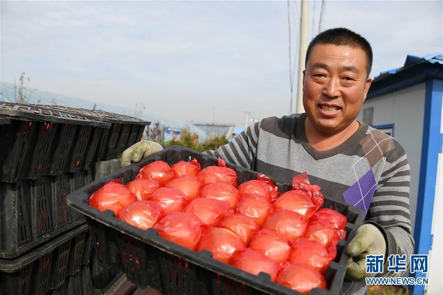 瞧瞧这些村咋富起来的——黑龙江省牡丹江市发展特色精品农业促农增收