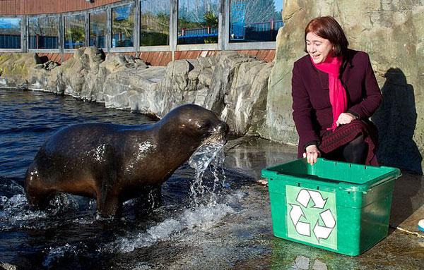 英动物园训练海狮捡垃圾 两个月5只出师