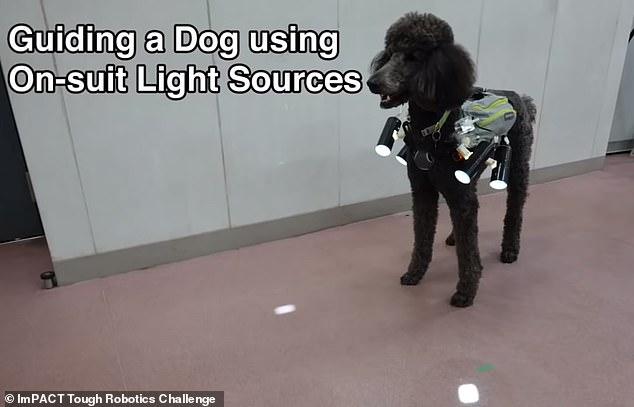日研究人员发明狗狗穿戴背心 可实施远程控制