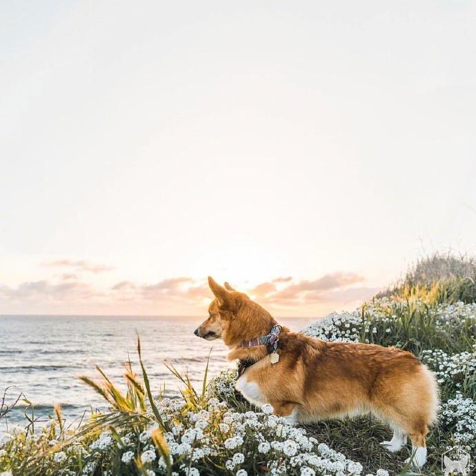 想养一只狗,带它一起去旅行