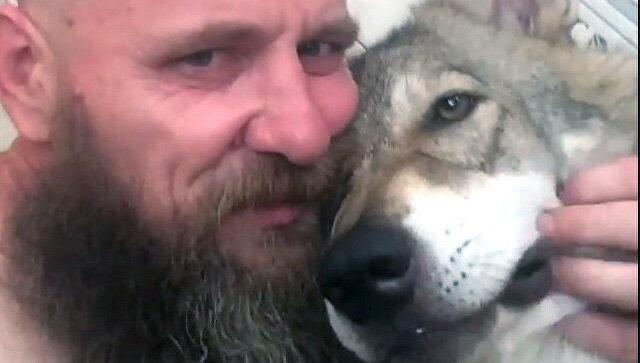 """现实版""""狼人""""故事:俄一名医务人员与狼共居"""