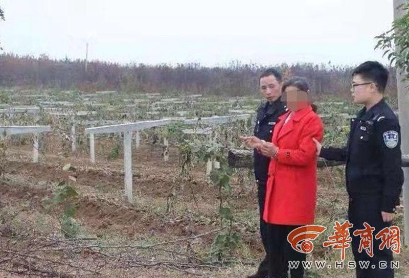 女子因琐事泄私愤报复 砍断他人643棵猕猴桃树