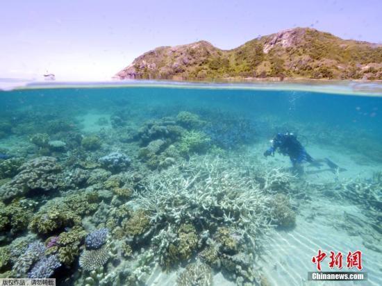 大堡礁现半年内第4起鲨鱼攻击 男子大腿遭咬伤