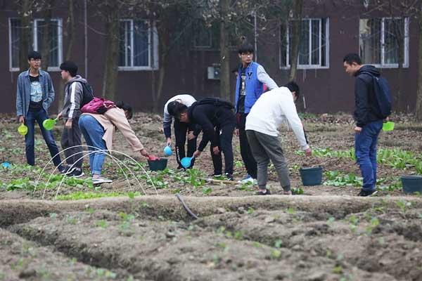 成都一高校开设种田必修课  学生夜晚打电筒种菜