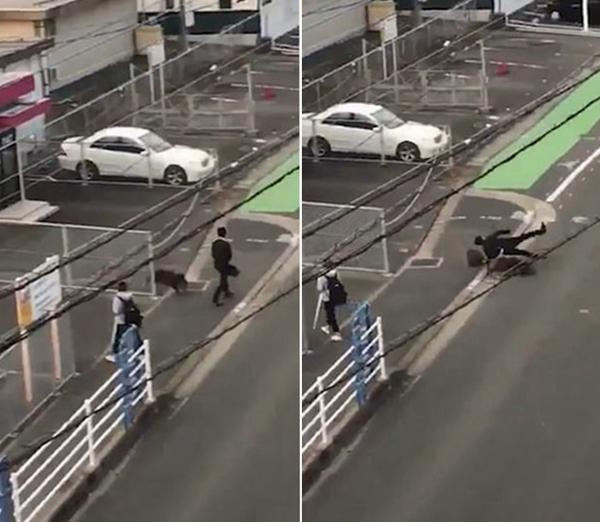 骇人!日本一男子步行上班途中突遭野猪袭击