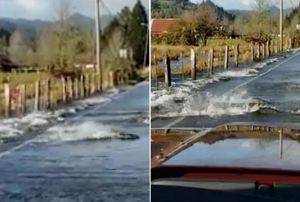 美国一条被淹高速路惊现鲑鱼逆流而上过路