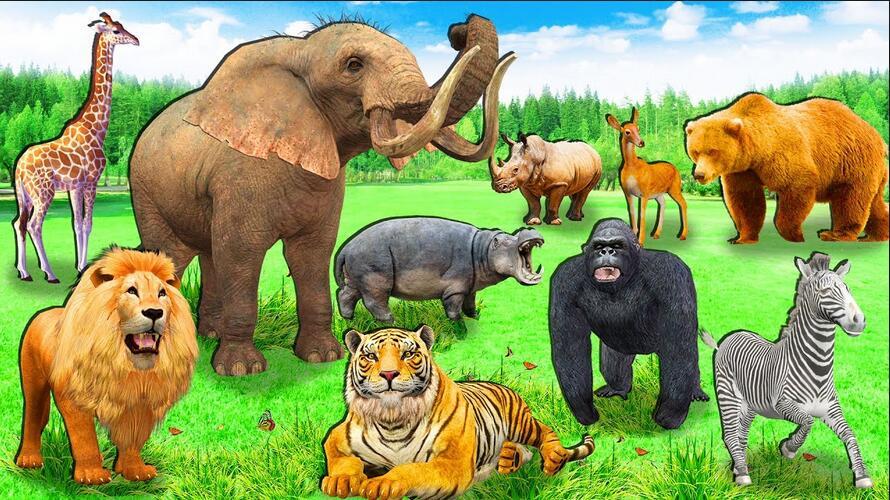 最会记仇的动物竟是它?关于动物你想了解的惊人秘密