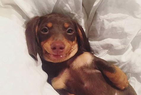 狗子也会假笑