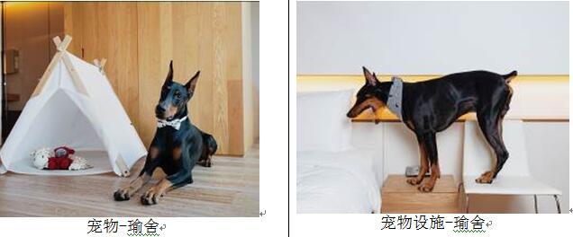 狗狗也能入住五星级酒店?