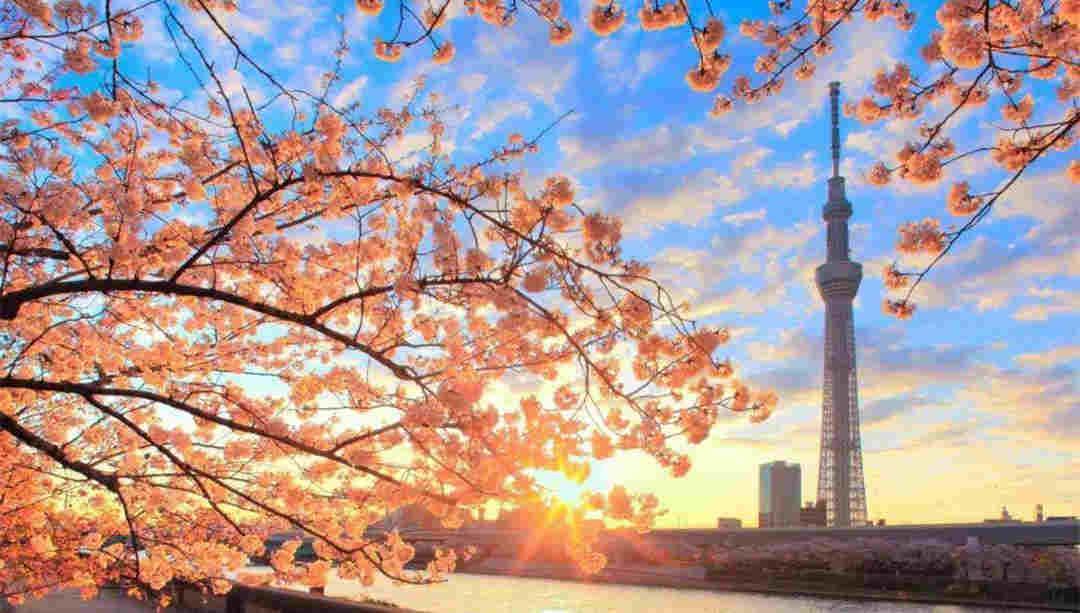 日本力推教育免费化 中国留学生将受益
