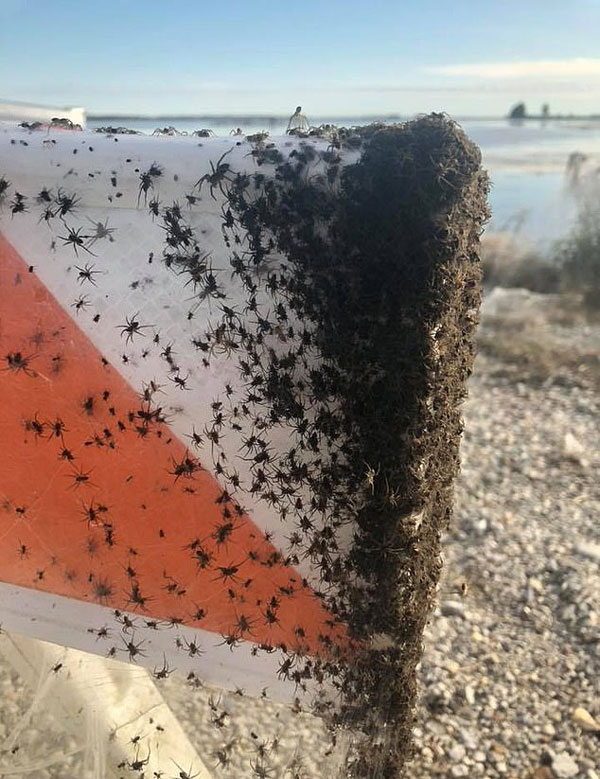 蜘蛛入侵!数千蜘蛛在美高速公路旁织网繁殖