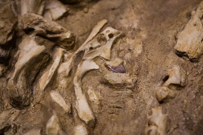 史密森尼学会将展示数千万年前的海洋霸主