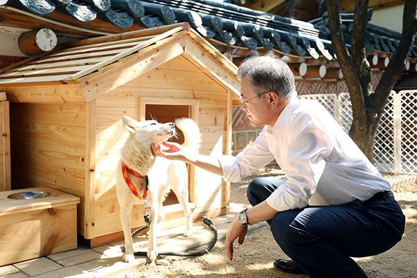 金正恩所赠丰山犬产下6崽,文在寅祈愿朝韩关系