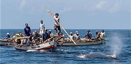 如今还靠小木船和竹鱼叉,印尼部落捕数十吨的鲸鱼