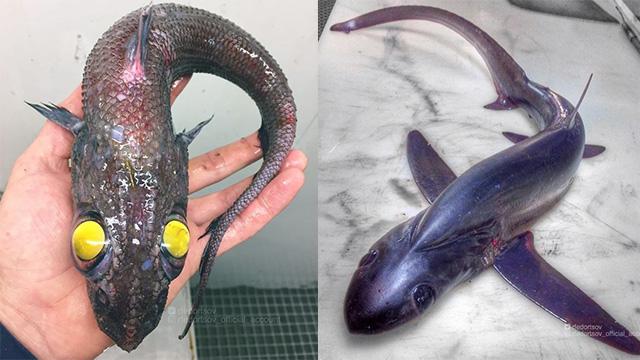 俄罗斯渔民发布可怕的深海生物