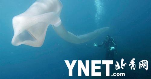 """新西兰海底惊现""""巨型""""蠕虫 长约8米移动缓慢"""