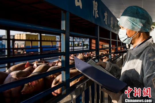 三部门:加强生猪调运监管 严管严控生猪运输车辆
