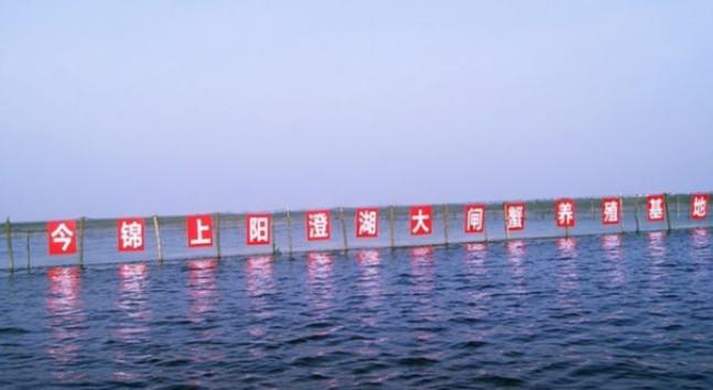 电商20年,中国物流弯道超车