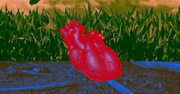 科学家开启人造心脏:跟真实一样能跳动