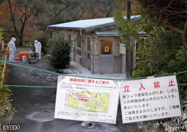 日本发现26年来第2例猪瘟,岐阜县已对21头猪实施扑杀处理