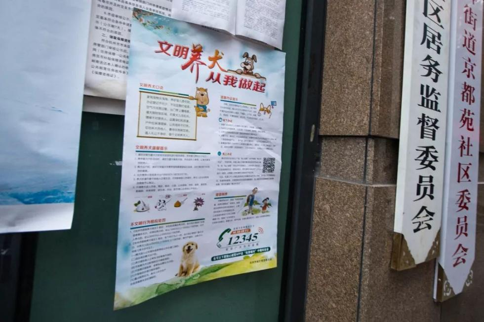 """杭州回应""""最严""""养狗令 消除""""人狗矛盾""""关键应该管什么?"""