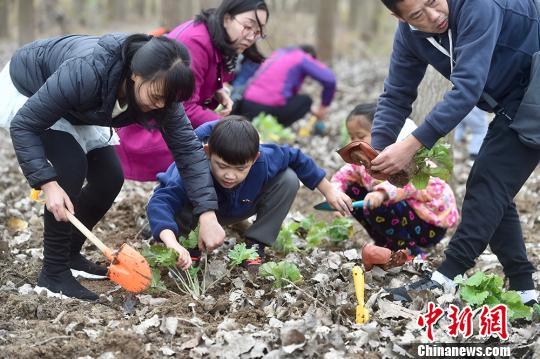 """南京百组家庭""""祈愿和平""""共建和平花圃"""