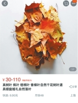 200片枫树叶网上售价上百元 专家提醒:当心里面有虫卵