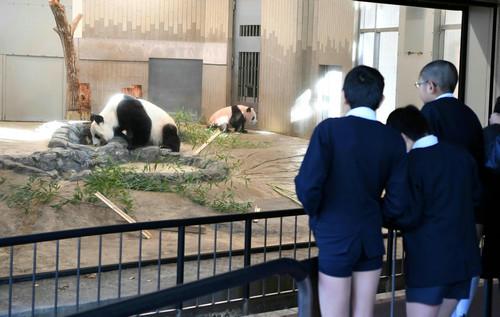 日媒:毋庸置疑!日本人对大熊猫是真爱