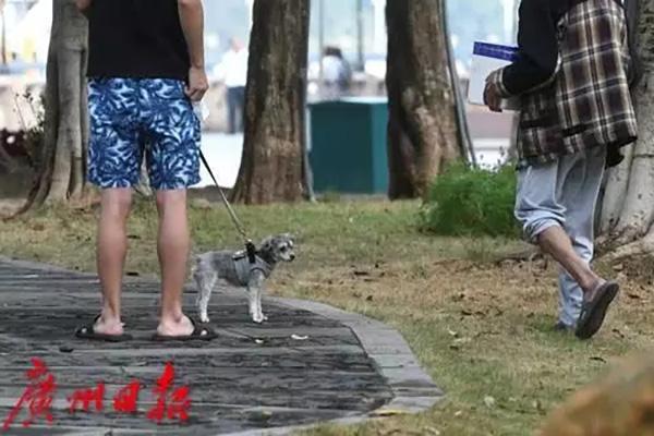两狗打架一狗主被咬伤,谁担责?顺德法院判了:不牵绳的一方