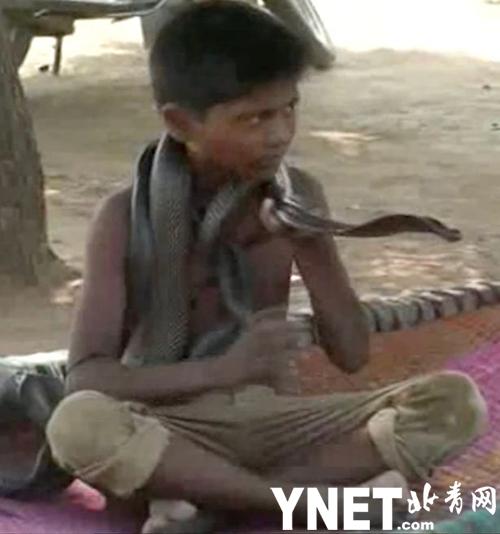 印度7岁男孩每天和毒蛇吃饭睡觉 父母劝说无效只能避而远之