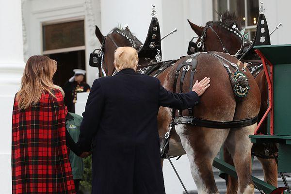 """圣诞树送抵美国白宫 特朗普偕夫人迎接""""拍马屁"""""""