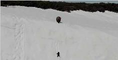 一对在雪山求生的棕熊母子