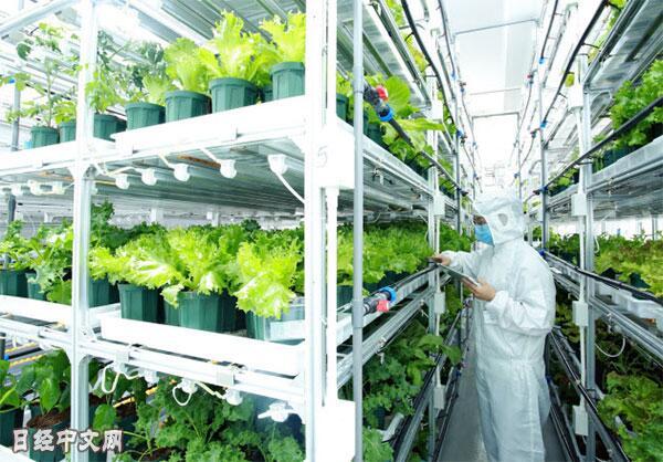 日本7-11将建植物工厂自己种生菜