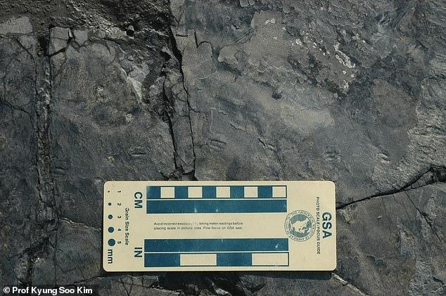 韩国发现1.1亿年前最小恐龙足迹 推测大小宛如麻雀