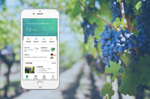 MAP慧农APP上线 中化智慧农业赋能经作精准种植