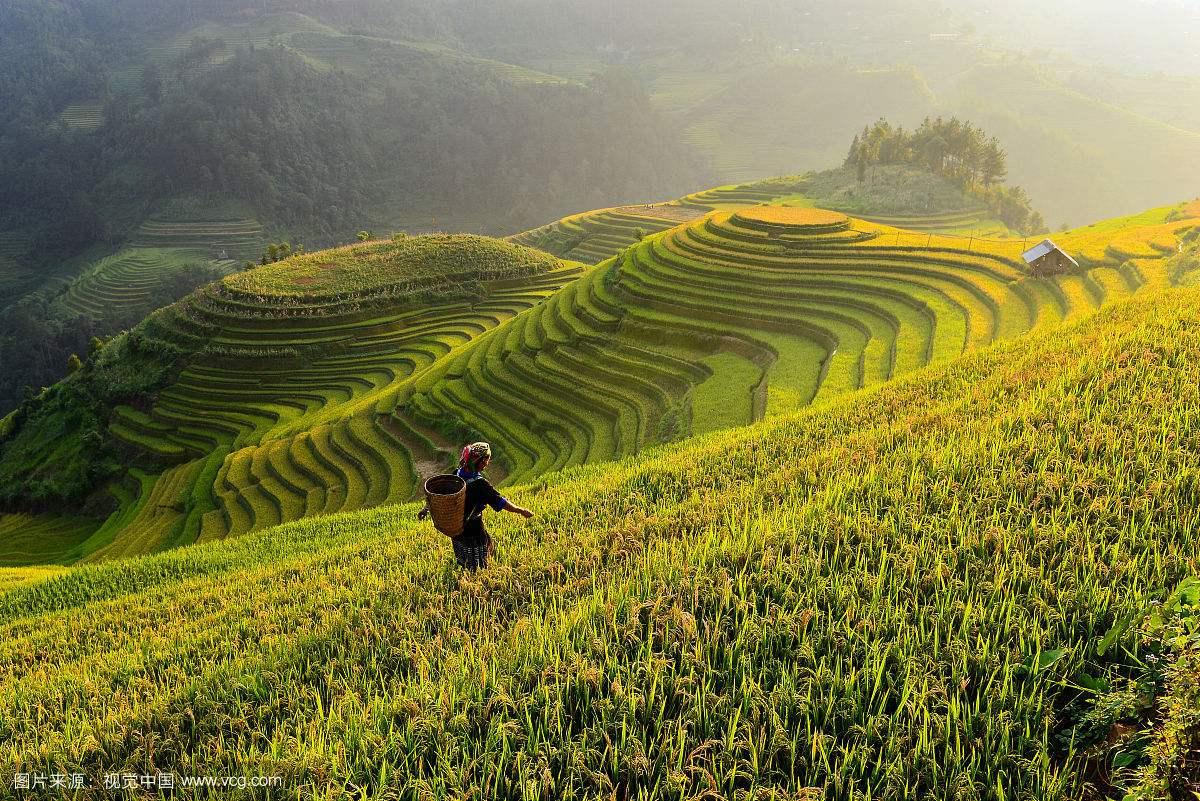 我国农业将从增产导向转至提质导向