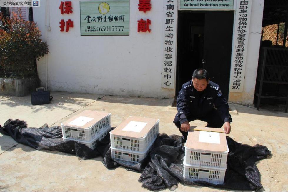 云南警方破获两起特大危害野生动物案 查获象牙等国家一级保护动物制品