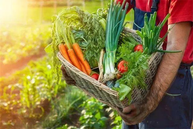 """网友评""""十大最难吃蔬菜"""" 第一名营养价值却很高"""