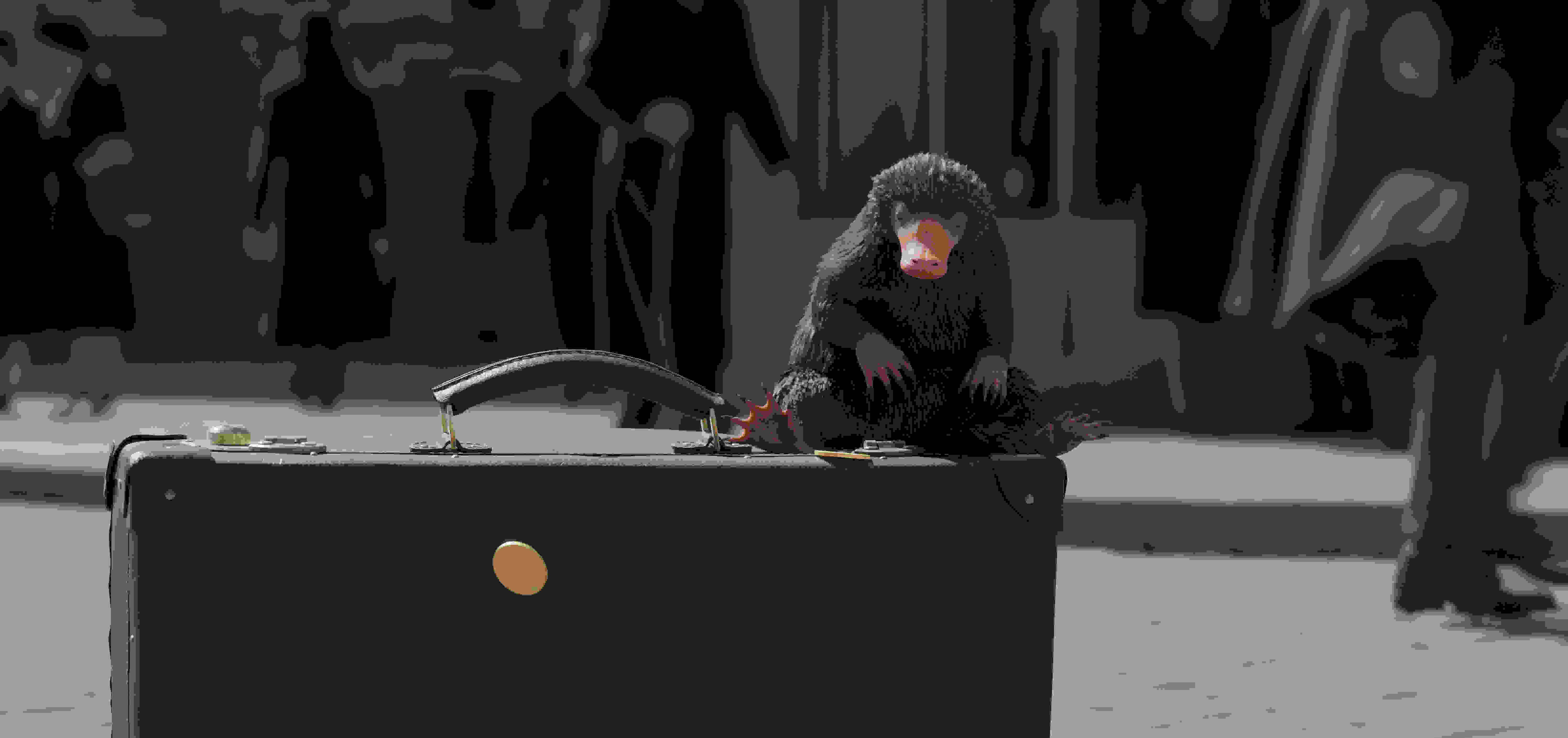 《神奇动物2》曝水下坐骑片段 纽特家酷到没朋友