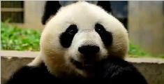 熊猫宝宝的下午茶时光