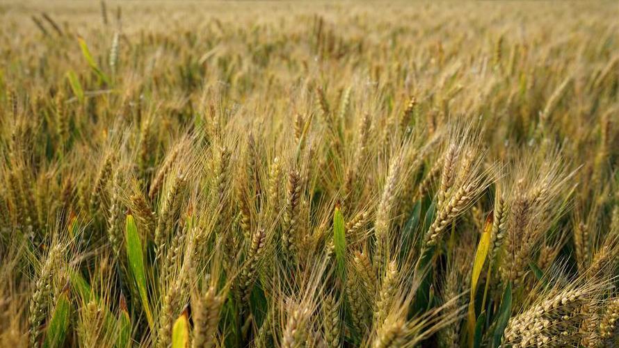 已放宽外商投资农作物种业市场准入