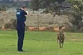 澳警察近距离多次开枪射杀受伤袋鼠