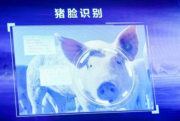 为什么平安彩票pa5.com的平安彩票网巨头都热衷于养猪
