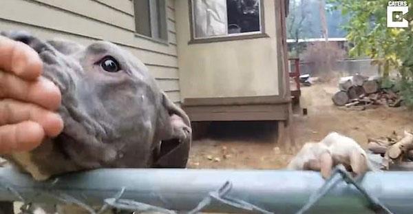 温馨!加州13只身陷火灾狗狗获救后紧随救援人员